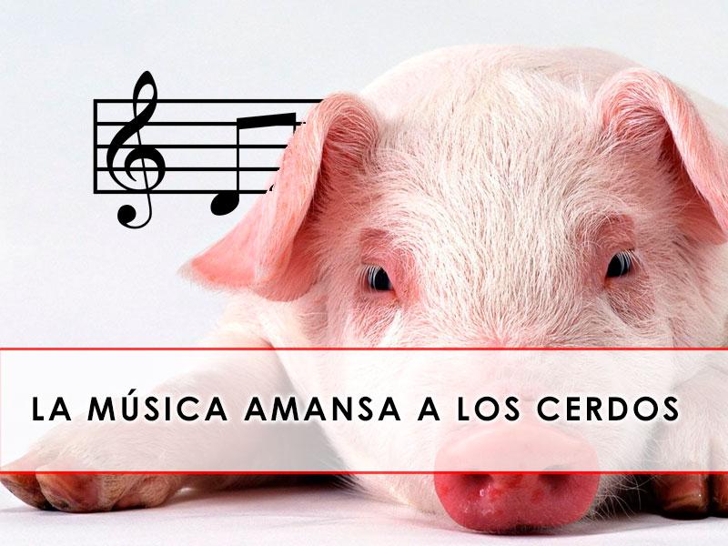 La música amansa a los cerdos